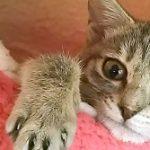 コラム「猫の手も借りたい」№143 ねこのみみ さん