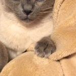 コラム「猫の手も借りたい」№151 「ネコ」のドラマって