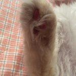 コラム「猫の手も借りたい」№156 ミュータント