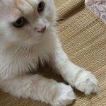 コラム「猫の手も借りたい」№163 フードボウル