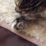 コラム「猫の手も借りたい」№167 長寿はめでたい!?