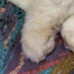 コラム「猫の手も借りたい」№174 世界と日本 上