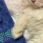 コラム「猫の手も借りたい」№176 攻防戦