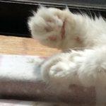 コラム「猫の手も借りたい」№177 6月のふるさと