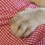 コラム「猫の手も借りたい」№88 「おひっこし」