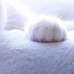 コラム「猫の手も借りたい」№90 九ちゃん 下