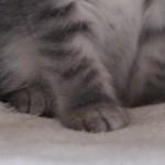 コラム「猫の手も借りたい」№91 節分