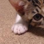 コラム「猫の手も借りたい」№92 じんべえ 上
