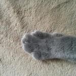 コラム「猫の手も借りたい」№94 じんべえ 下