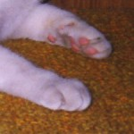 コラム「猫の手も借りたい」№96 ご無沙汰