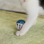 コラム「猫の手も借りたい」№97 里親さん探し