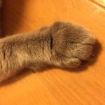 コラム「猫の手も借りたい」№99 真夏