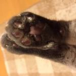 コラム「猫の手も借りたい」№100 100回記念