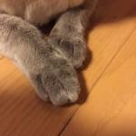 コラム「猫の手も借りたい」№101 TNR