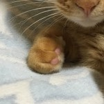 コラム「猫の手も借りたい」№105 寄り添って