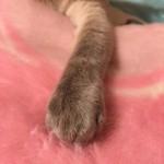 コラム「猫の手も借りたい」№106 タマ×2