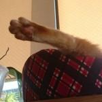 コラム「猫の手も借りたい」№109 望まれて2