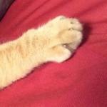 コラム「猫の手も借りたい」№111 遅刻のわけ