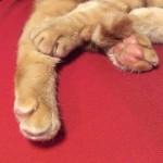 コラム「猫の手も借りたい」№110 処方食