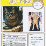 (掲載終了)迷い猫情報 お心当たりの方はご連絡ください