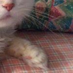 コラム「猫の手も借りたい」№161 救出! 上