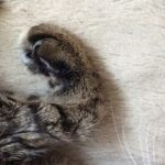 コラム「猫の手も借りたい」№168 ボランティアってなんだろ?! 上