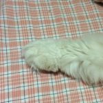 コラム「猫の手も借りたい」№175 世界と日本 下