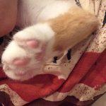 コラム「猫の手も借りたい」№181 小物でごめんなさい