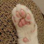 コラム「猫の手も借りたい」№188 続々 投薬