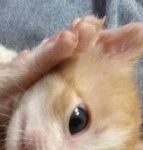 コラム「猫の手も借りたい」№203 トラミにゃ勝てないわ2