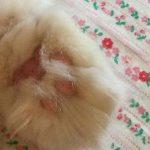 コラム「猫の手も借りたい」№206 ネコ係