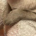 コラム「猫の手も借りたい」№208 ムギちゃんの新年