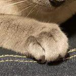 コラム「猫の手も借りたい」№209 ヘルスメーター