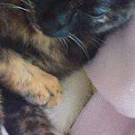 コラム「猫の手も借りたい」№211 続  ネコそれぞれ
