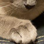 コラム「猫の手も借りたい」№213 首輪