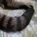 コラム「猫の手も借りたい」№219 子ネコシーズン到来