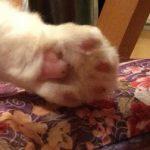 コラム「猫の手も借りたい」№224 ムギちゃんの置きエサ 上