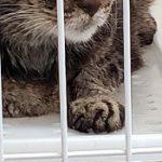 コラム「猫の手も借りたい」№225 ムギちゃんの置きエサ 下